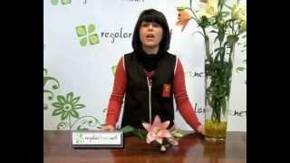 Consejos  para la Flor Lilium