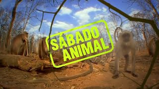 Vila Kids | SÁBADO ANIMAL