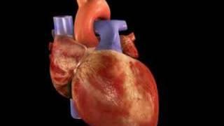 latidos del corazon