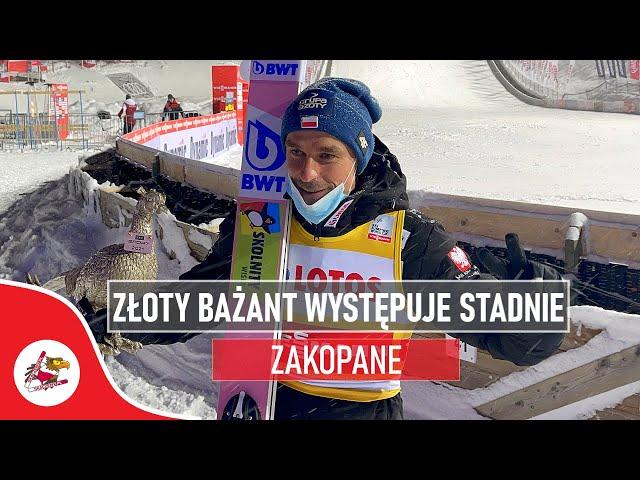 Złoty bażant odebrany. Piotr Żyła wraca do domu z trofeum z Turnieju Czterech Skoczni
