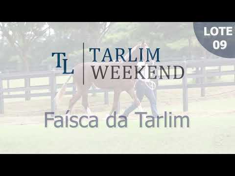 Lote 09 - Faísca da Tarlim (Potros Tarlim)