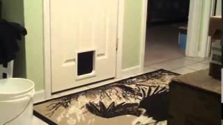 Пылесосы и коты  Жёсткий развод  смешное видео