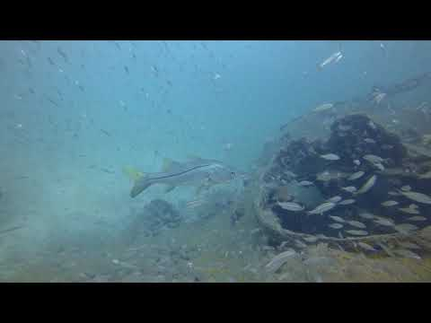 Snook barge Gene Cloud Spearfishing Tournament 2017