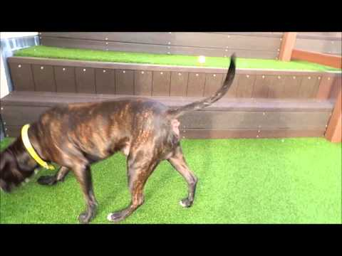 Dogs Trust Manchester Chico
