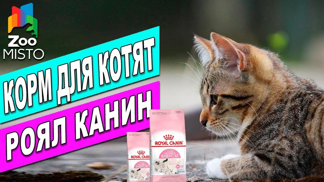 Корм для котят Royal Canin Mother And Babycat Обзор