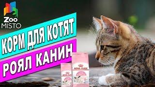 Корм для котят Royal Canin Mother and Babycat | Обзор корма для котов | Royal Canin review