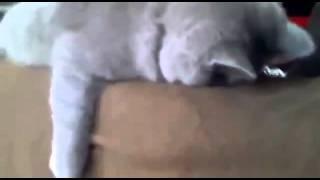 кот устал как собака