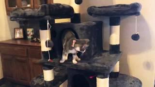 Когтеточка-домик, Игровой комплекс Кофморт Ультра для нескольких кошек