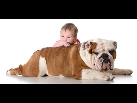 Funny English Bulldog and Baby Video Compilation - Funny Dogs and Babies - Baby Loves Dogs
