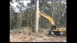 Feller Cutting Big Tree