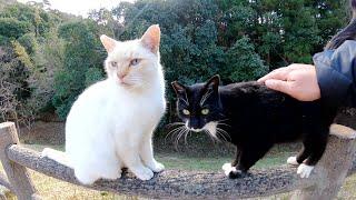 落ちないでね!メチャクチャ可愛い仲良し猫トリオが柵に登って遊ぶ