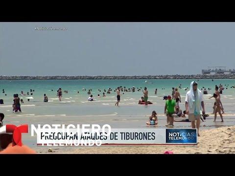 Tres ataques de tiburón en una semana en la Florida | Noticiero | Noticias Telemundo