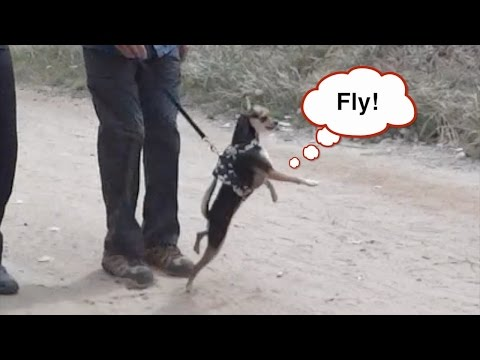 Bushman Prank on Dogs! Scaring Dogs!