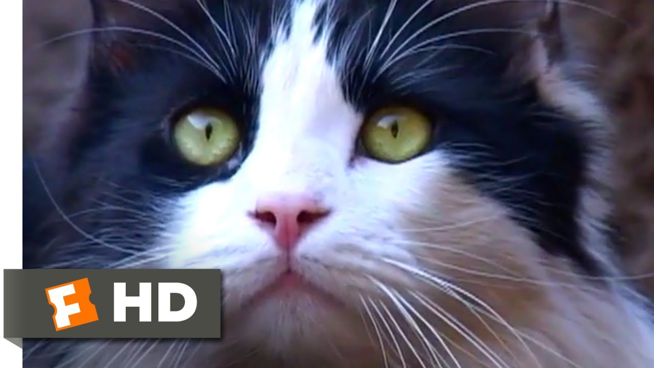 A Cat's Tale (2008) - Tag or Hide and Seek? Scene (8/10) | Movieclips