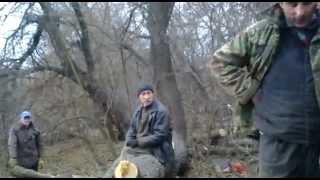 Незаконная вырубка деревьев на Хортице. Телефонное право