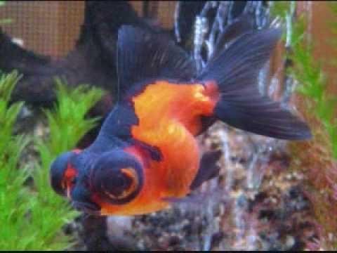 los peces comunes y raros youtube