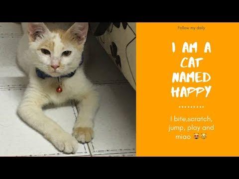 Mixed Breed 'Happy' Kitten Cat