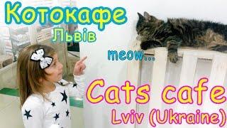 Котокафе с живыми кошками во Львове   Vlog Zoo Cafe with life cats, Lviv Ukraine