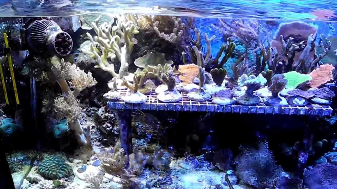 kessil a150w led ocean blue ablegerbecken youtube