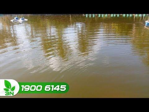 cách làm sạch nước ao nuôi cá