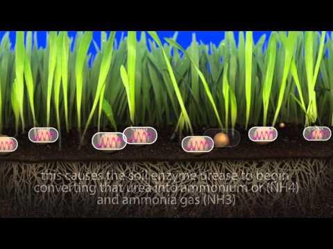 Understanding The Threat Of Volatilization In Urea Based Fertilizers - LebanonTurf