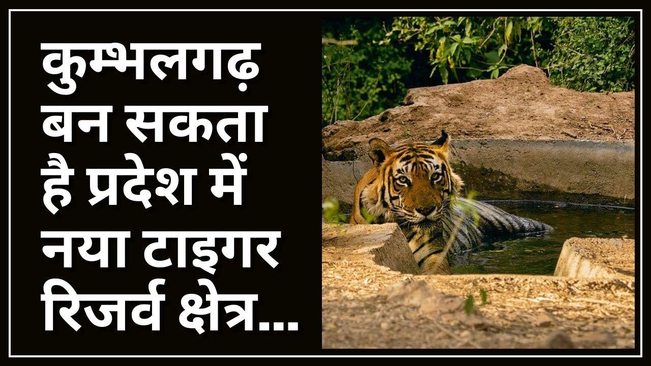 कुम्भलगढ़ बन सकता है प्रदेश में नया टाइगर रिजर्व क्षेत्र..