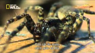 PBS Triumph of Life - The Mating Game EP2 (vietsub)