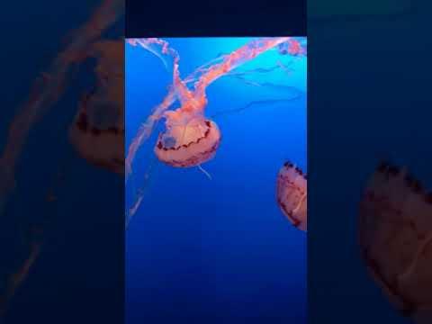 Honeymoon Monterey peninsula aquarium 2018 jellyfish