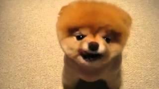 ПРИКОЛЫ 2017 С ЖИВОТНЫМИ! смешная Собака - умиление вызывака.