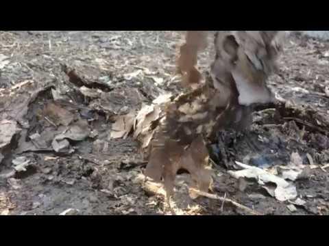 moles-–-best-control-method