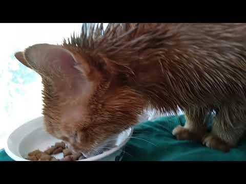 Coconut oil kills fleas