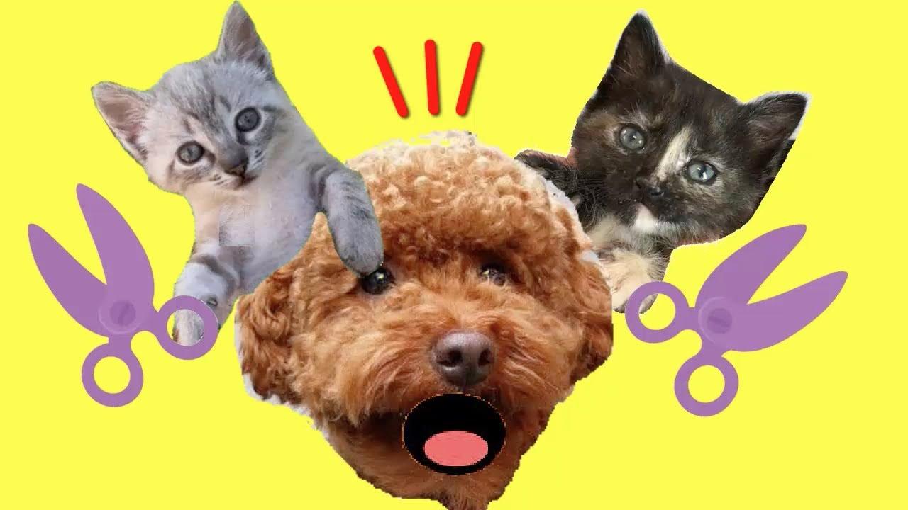 Reacción de mis gatos Luna y Estrella y los gatitos al nuevo look de mi perro / Cute Kittens