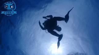 보홀 다이빙 투어의 추억 ㅣ 2017년 [스쿠버다이빙/scubadiving/코브라다이브] 201707 Bohole Tour memories