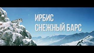 Ирбис. Снежный Барс