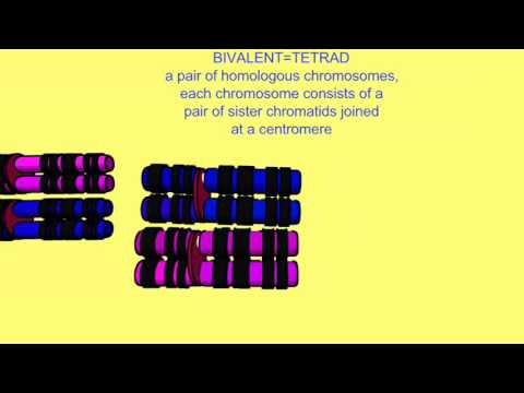 an introduction to the analysis of chromosomes