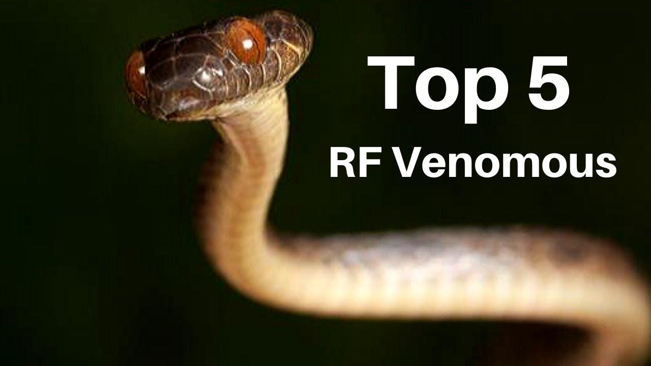 Top 5 Rear Fanged Venomous Snakes Youtube