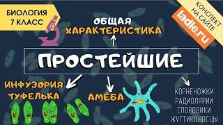 Простейшие  | Видеоурок по биологии 7 класс
