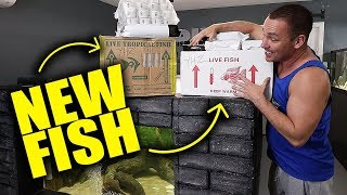 epic-new-fish-unboxing
