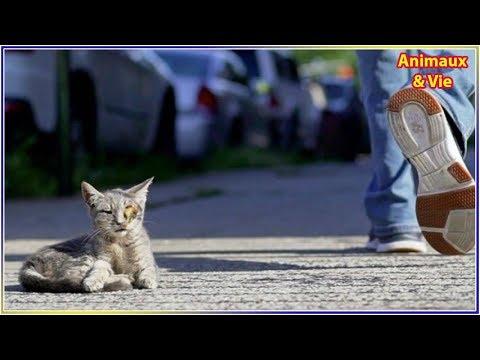Ils voient un chaton au milieu de la rue, mais quand ils s'approchent ils sont furieux