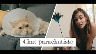 BLOG A POILS   CHAT PARACHUTISTE