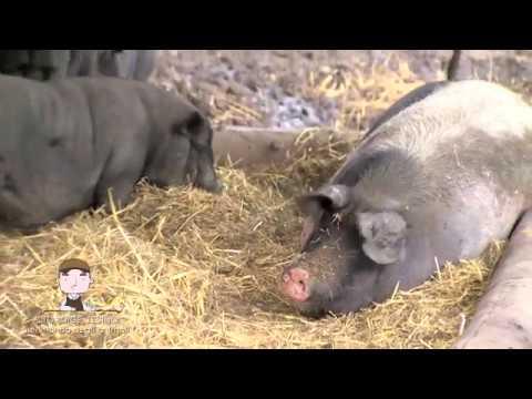 ALTO ADIGE- SÜDTIROL, TESIMO: NEL MONDO DEGLI ANIMALI