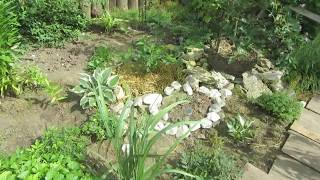Стригу, планирую, мечтаю в белом саду!