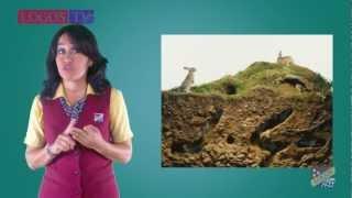Types of soil - Logos Academy