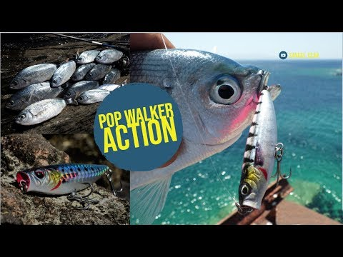 Crazy Top Water Fishing with Pop Walker by Savage Gear🔥🔥🔥🔥