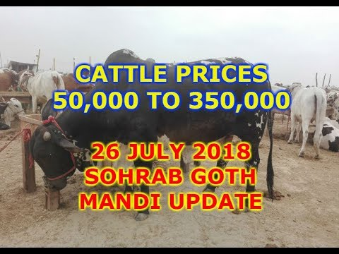 Cattle Prices - Small and Medium Sized - Karachi Sohrab Goth Mandi Update 26 July 2018