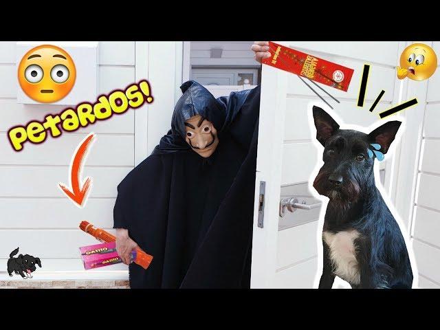 HOMBRE MISTERIOSO entra en casa a TIRAR PETARDOS DE SAN JUAN / Lana funnydogs
