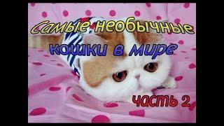 Самые необычные кошки в мире, кошки   звёзды интернета, часть 2