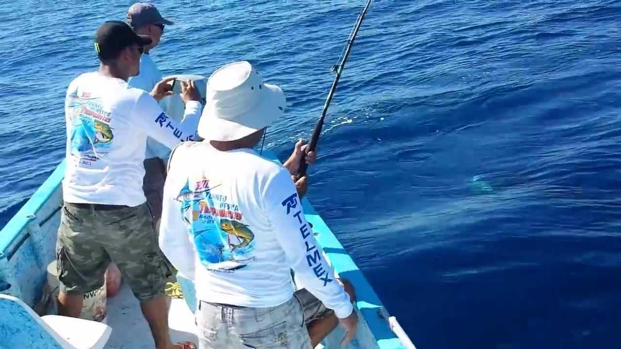 Great sport fishing sailfish caught in bay of dreams la for Baja california fishing