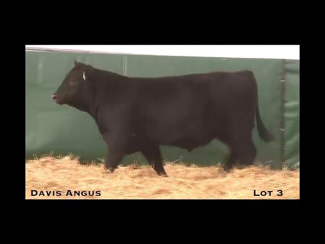 Davis Angus Lot 3