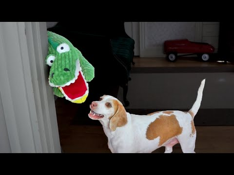 Dog vs. Annoying Alligator Puppet: Cute Dog Maymo